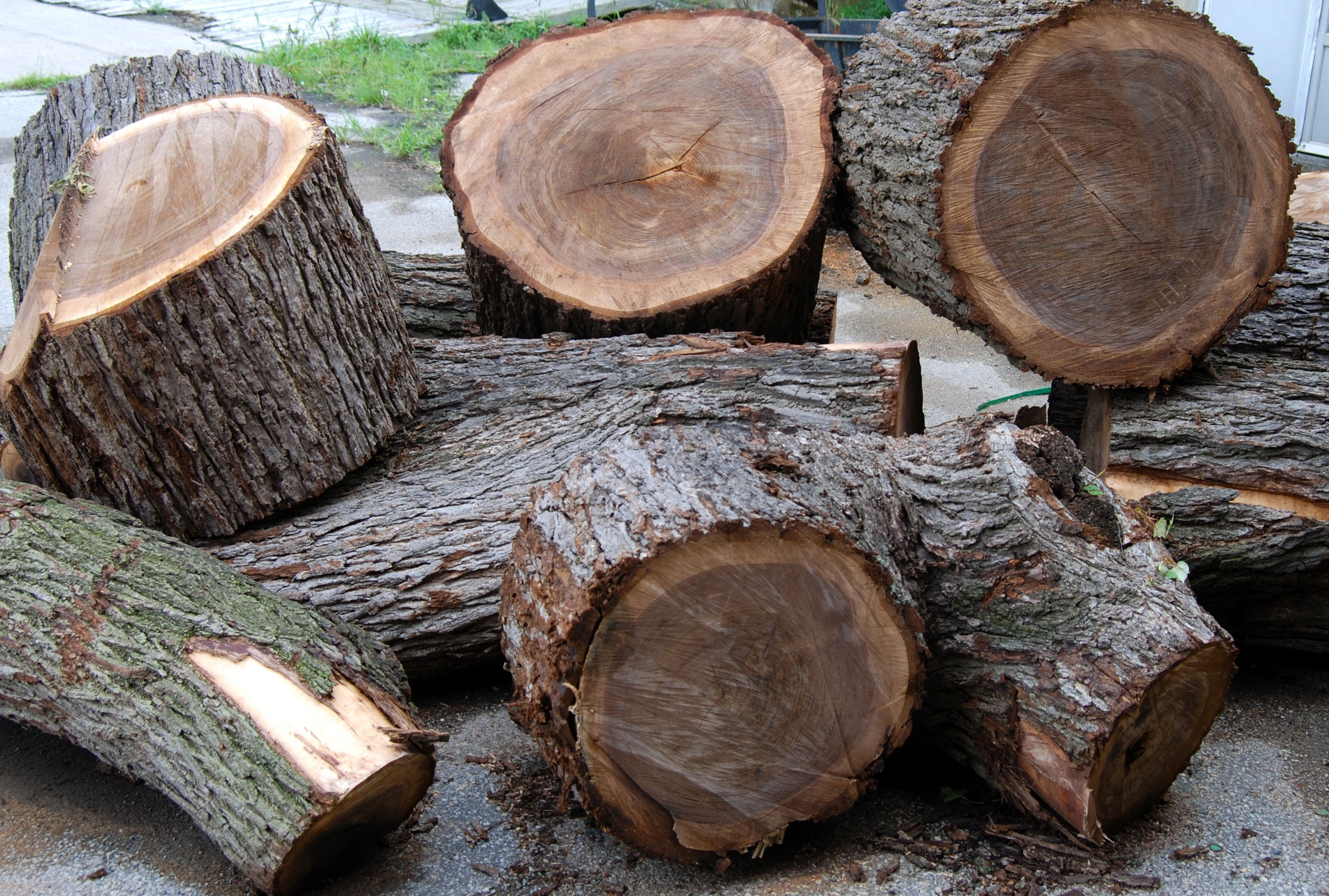 we feel lucky to have obtained this wood due to the shortage of recycled black walnut trees in our city black walnut tree trunk